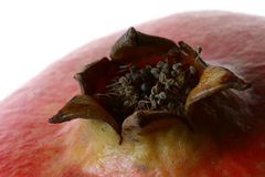 Pomegranate detail 4. Studio macro of a pomegranate flower royalty free stock photography