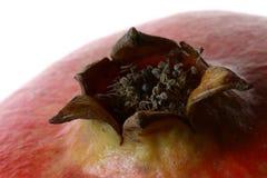 pomegranate för 4 detalj royaltyfri fotografi