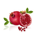 Pomegranate. Fresh pomegranate fruits isolated on white background. Vitamins and minerals. Healthy concept, vector illustration Stock Images