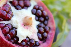 Pomegranate freshly opened with leaves stock image