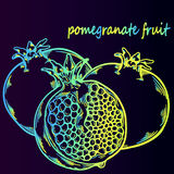 Pomegranate fruit - neon sketch Stock Photography