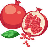 Pomegranate Fruit vector. Illustration Pomegranate Fruit on White background vector Royalty Free Stock Photo
