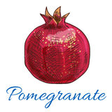 Pomegranate fruit vector icon Royalty Free Stock Images