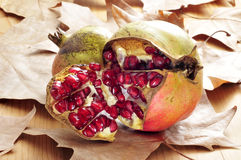 Pomegranate fruits. Some pomegranate fruits and arils on an autumn background stock photos