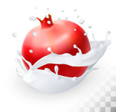 Pomegranate or garnet in a milk splash. On a transparent background. Vector Stock Image