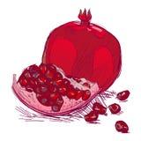 Pomegranate or garnet Stock Images