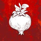 Pomegranate on grunge red background. Hand drawn pomegranate on grunge red background Stock Photos