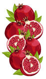 Pomegranate isolated, Vector, composition. Royalty Free Stock Images