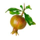 Pomegranate isolated on white background Stock Photography