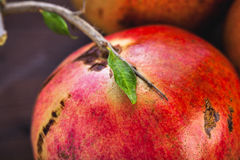 Pomegranate macro Royalty Free Stock Photo