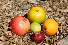 Pomegranate and orange fruits on the autumn dry leaves Stock Photos