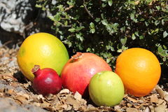 Pomegranate and orange fruits on the autumn dry leaves Royalty Free Stock Photos