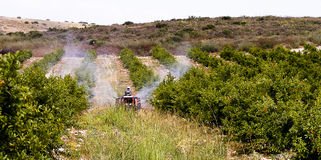 Pomegranate orchard sprayer tractor Stock Photography