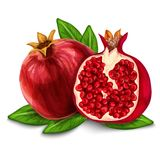 Pomegranate   poster or emblem Stock Images