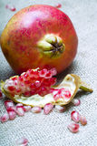 Pomegranate (Punica granatum) Royalty Free Stock Photos