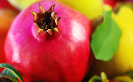 Pomegranate and quinces. Stock Photo