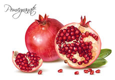 Pomegranate realistic illustration. Vector realistic illustration of pomegranate fruits group isolated on white background. Design element for cosmetics, spa Stock Photography