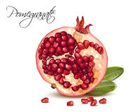 Pomegranate realistic illustration royalty free illustration
