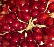 Pomegranate. Ripe red berries pomegranate, macro Royalty Free Stock Photos