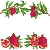 Pomegranate. Set of pomegranates. Vector illustration on a transparent background. Royalty Free Stock Photos
