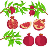 Pomegranate. Set. Vector illustration Royalty Free Stock Image