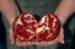 Pomegranate slices Stock Images