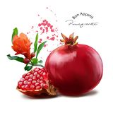Pomegranate and splatter. Watercolor painting. White background stock illustration