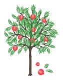 Pomegranate tree Stock Photography