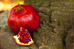 Pomegranate on the tree Stock Photos