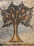 Pomegranate tree in Caesarea, Israel. Pomegranate tree at `The Bird Mosaic Palace` Archaeology in Caesura, Israel royalty free stock photos