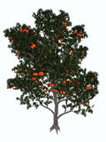 Pomegranate tree - 3D render Stock Images
