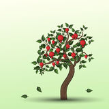 Pomegranate tree with fruits Royalty Free Stock Image