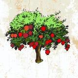 Pomegranate tree on grunge background. Hand drawn pomegranate tree on grunge background Stock Photography