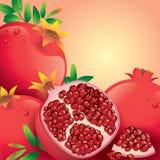 Pomegranate vector illustration. Royalty Free Stock Photo