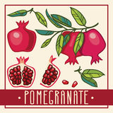 Pomegranate vector illustrations set Royalty Free Stock Images