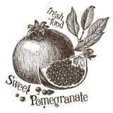 Pomegranate vector logo design template. fruit or Royalty Free Stock Photos