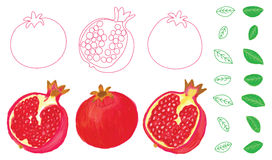 Pomegranate watercolor set Royalty Free Stock Photography