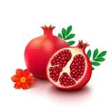 Pomegranate on white background Stock Photography