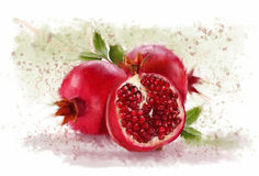Pomegranate on the white plane Stock Image
