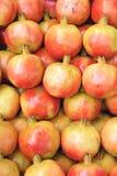 Pomegranatefrukter Arkivbilder
