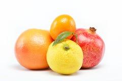 pomegranates цитрусовых фруктов Стоковые Изображения