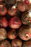 Pomegranates. Stock Photography