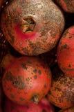 Pomegranates. Stock Photo