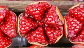 pomegranates Fotografering för Bildbyråer