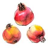 pomegranates Стоковая Фотография RF
