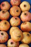 Pomegranates Royalty Free Stock Photo