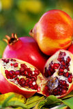 Pomegranates and leaves . Royalty Free Stock Images