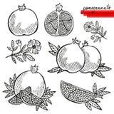 Pomegranates set Stock Image