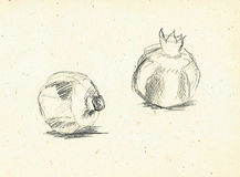 Pomegranates. Two sketched by pencil pomegranates on craft paper Royalty Free Illustration
