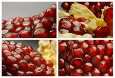 pomegranateset stock illustrationer